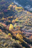 Höstlig bergskog Royaltyfria Foton