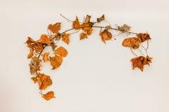 Höstlig bladram på vit royaltyfri foto