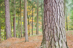 Höstlig färgrik skog Arkivbild