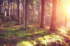 Höstlig färgrik skog på soluppgång Royaltyfri Fotografi