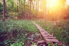 Höstlig färgrik skog på soluppgång Royaltyfria Bilder