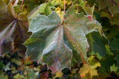 Höstlig frost Royaltyfri Fotografi