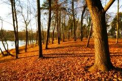 höstlig härlig park Arkivfoton