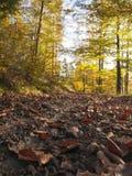 höstlig härlig skog Royaltyfri Fotografi