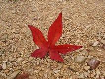 höstlig leaf Royaltyfria Foton