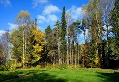 Höstlig natur, skog Fotografering för Bildbyråer
