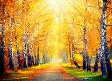 höstlig park trees för äng för höstbjörkleaves orange Arkivfoto