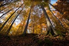 höstlig skog Arkivfoto