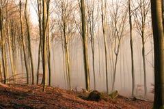 höstlig skog Royaltyfri Fotografi