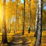 höstlig skog Royaltyfria Bilder