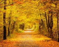 höstlig skog Arkivbild