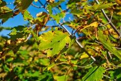 höstlig skog royaltyfri bild