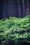 höstlig skog Arkivbilder