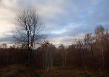 höstlig skog Royaltyfria Foton