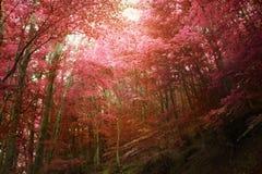 Höstlig skog för guld- nedgång royaltyfri fotografi
