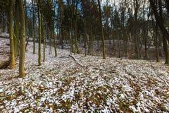 Höstlig skog för landskap på senare med första snö Royaltyfri Bild