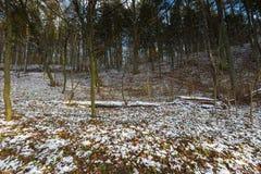 Höstlig skog för landskap på senare med första snö Arkivbilder