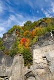 Höstlig skog i berg Arkivbilder