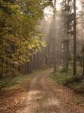 Höstlig skog i eftermiddagljuset Arkivbilder