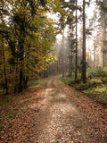 Höstlig skog i eftermiddagljuset Royaltyfri Fotografi