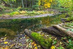 Höstlig skog med den lösa floden Royaltyfria Bilder