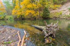 Höstlig skog med den lösa floden Royaltyfri Bild