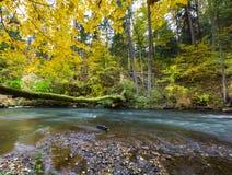 Höstlig skog med den lösa floden Arkivfoto