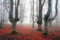 Höstlig skog med dimma Royaltyfri Fotografi