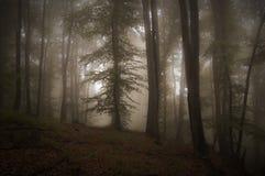 Höstlig skog med mystisk dimma Arkivfoton