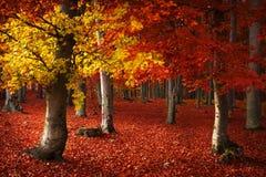 Höstlig skogmiljö Arkivbilder