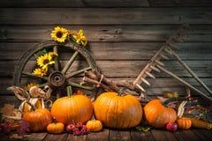Höstlig stilleben för tacksägelse med pumpor royaltyfri fotografi