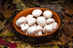 Höstlig stillebensammansättning: lerakruka och champignons Royaltyfri Foto