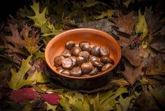 Höstlig stillebensammansättning: lerakruka och kastanjer Royaltyfri Fotografi