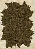 Höstlig texturerad LeafCollage Arkivbilder