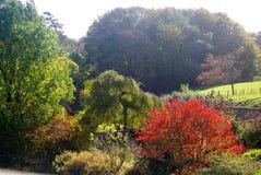 Höstlig trädplats Arkivbild