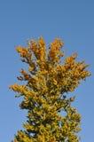 höstlig tree Fotografering för Bildbyråer