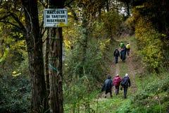 Höstlig trekking i landskapet av Siena, från Buonconvento till Royaltyfria Foton