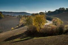 Höstlig trekking i landskapet av Siena, från Buonconvento till Monte Oliveto Maggiore Abbey Royaltyfri Fotografi