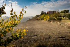 Höstlig trekking i landskapet av Siena, från Buonconvento till Monte Oliveto Maggiore Abbey Arkivfoto
