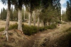 Höstlig trekking i landskapet av Siena, från Buonconvento till Monte Oliveto Maggiore Abbey Royaltyfri Bild