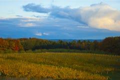 Höstlig vingård Royaltyfri Foto