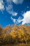 höstliga blåa molniga skytrees under yellow Arkivbilder
