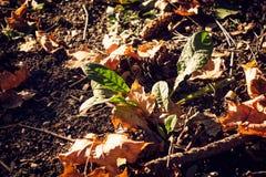 Höstliga färger på jordningen i skog Royaltyfri Bild