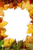 höstliga färgrika leaves royaltyfria foton