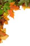 höstliga färgrika leaves arkivbild