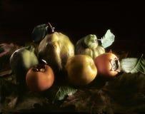 Höstliga frukter på sidor royaltyfri fotografi