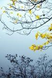 Höstliga gulingsidor på kust- träd fotografering för bildbyråer