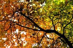 höstliga leaves Fotografering för Bildbyråer