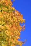 höstliga leaves Arkivbilder