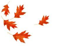 höstliga leaves royaltyfri bild